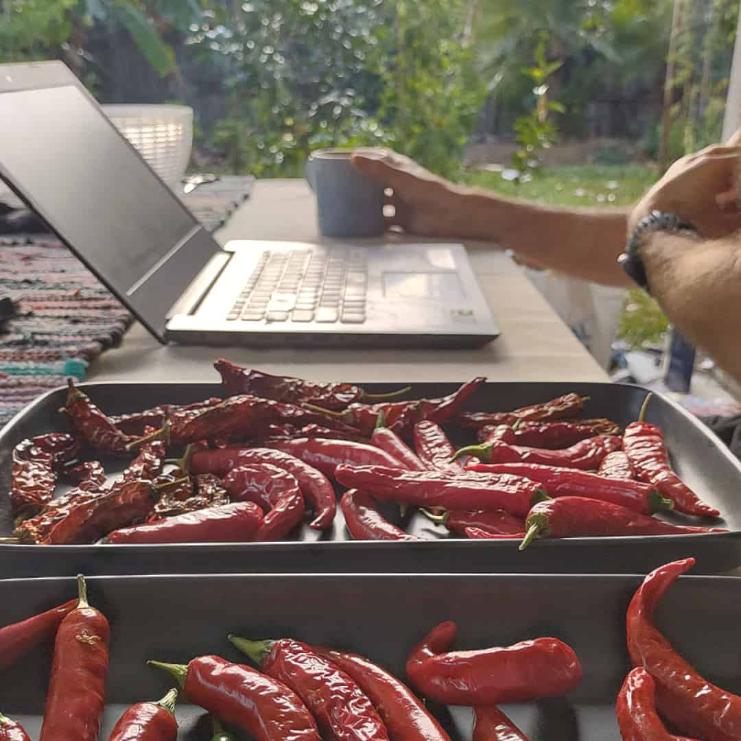 What to do with chillies drying naturally
